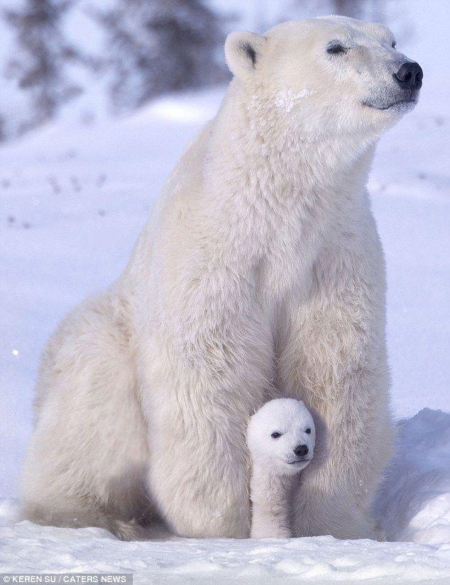 Озорные медвежата на зимней прогулке