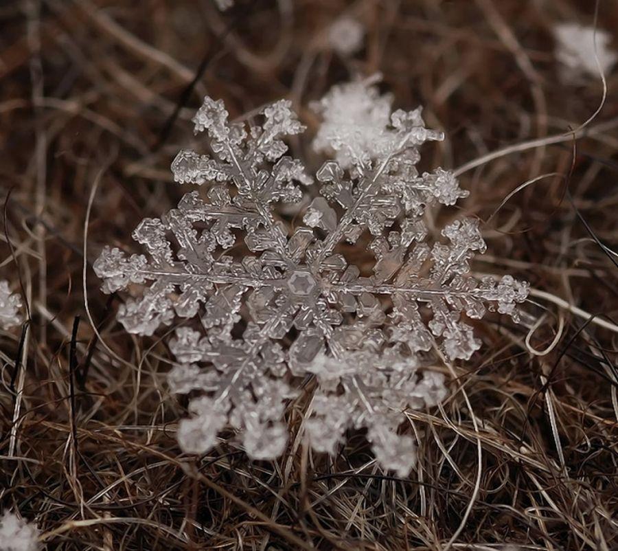 Снежное макро Андрея Осокина