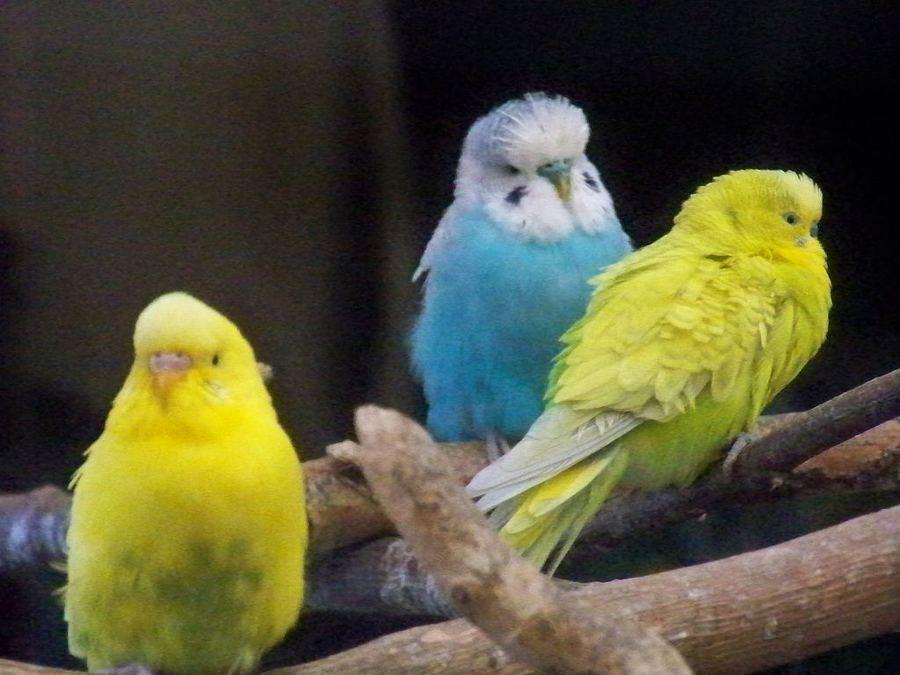 волнистые попугаи почему попугай грызет клетку