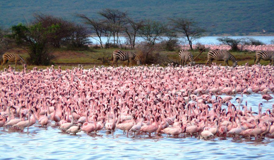 http://animalworld.com.ua/images/2012/February/Animals/Flamingo/Flamingo_12.jpg