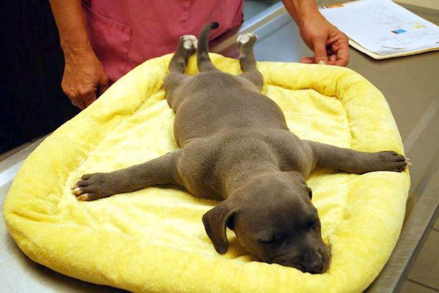 Как любовь к животным спасла щенку жизнь