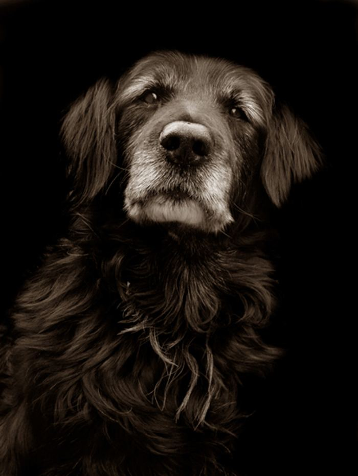 Проект Трэер Скотт: Собаки из приюта Terrier_1