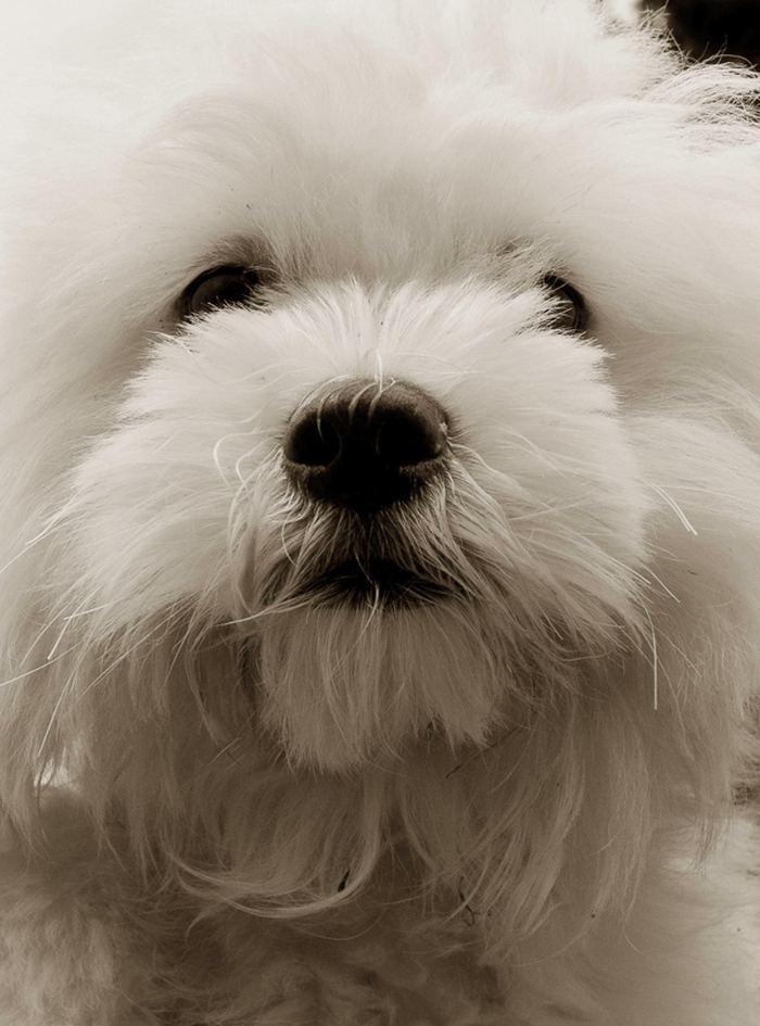 Проект Трэер Скотт: Собаки из приюта Terrier_3