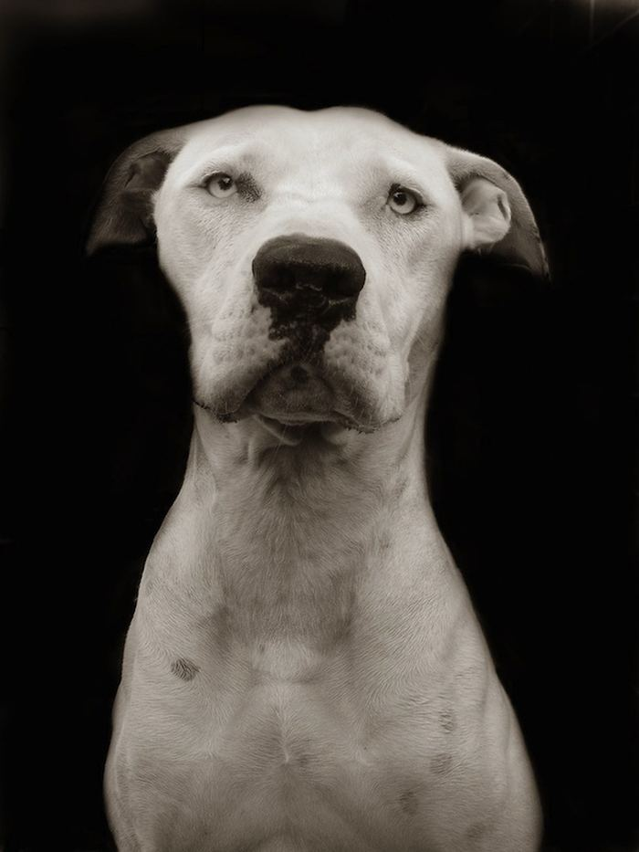 Проект Трэер Скотт: Собаки из приюта Terrier_4