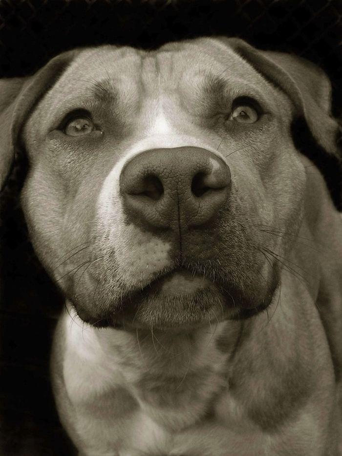 Проект Трэер Скотт: Собаки из приюта Terrier_5