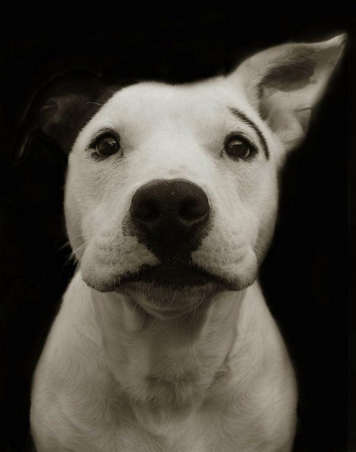 Проект Трэер Скотт: Собаки из приюта Terrier_6