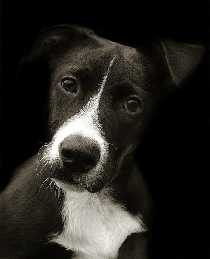 Проект Трэер Скотт: Собаки из приюта Terrier_7