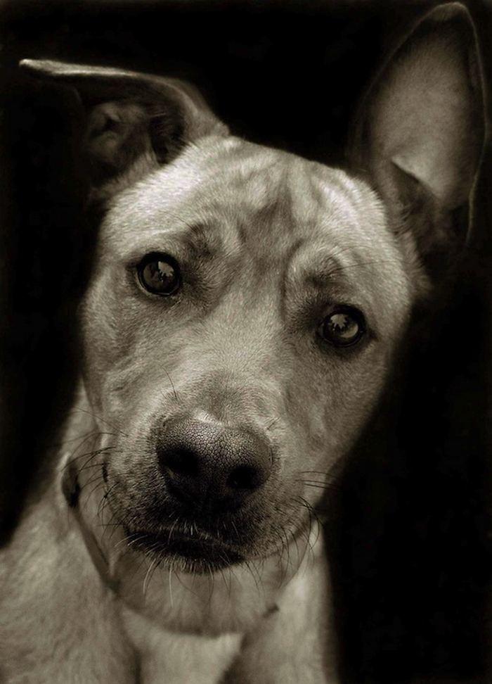 Проект Трэер Скотт: Собаки из приюта Terrier_8