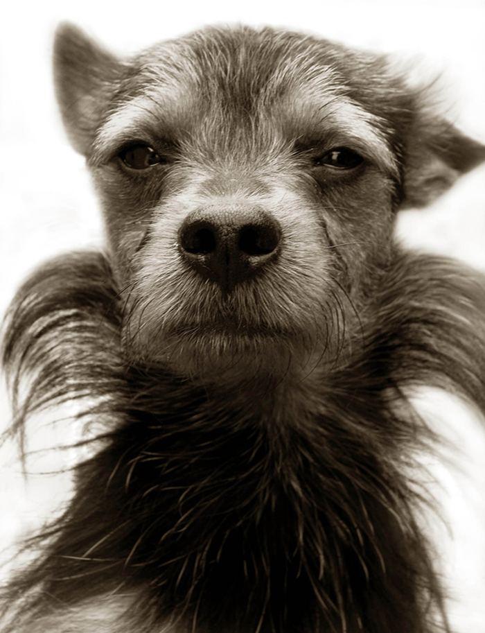 Проект Трэер Скотт: Собаки из приюта Terrier_9
