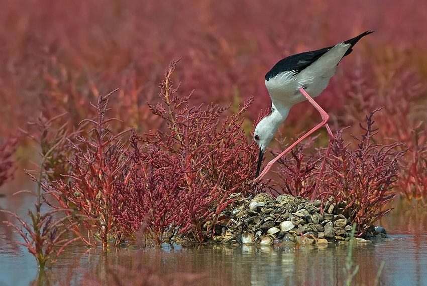 http://animalworld.com.ua/images/2012/January/Animals/Bird/Bird_34.jpg
