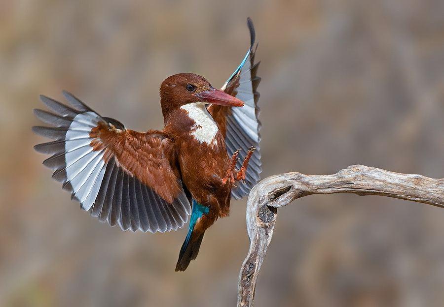 Увлекательные фото птиц от фотографа Яки Зандер