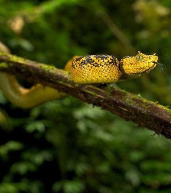 Место где держат змей