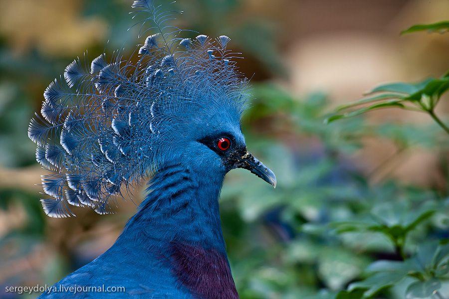 Уникальный Птичий зоопарк в Сингапуре