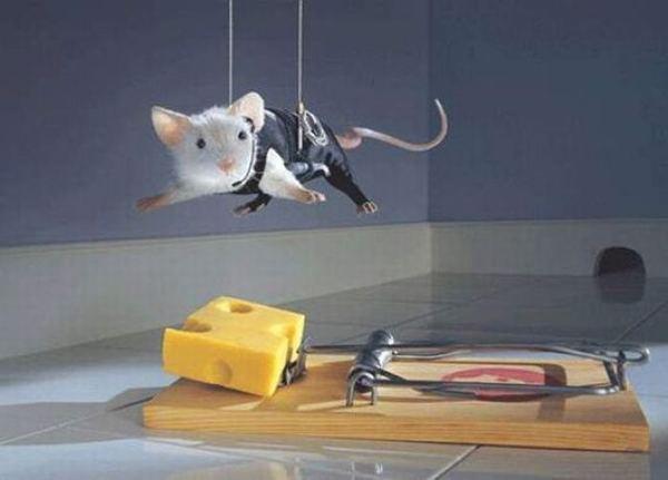 Смешное фото сыра