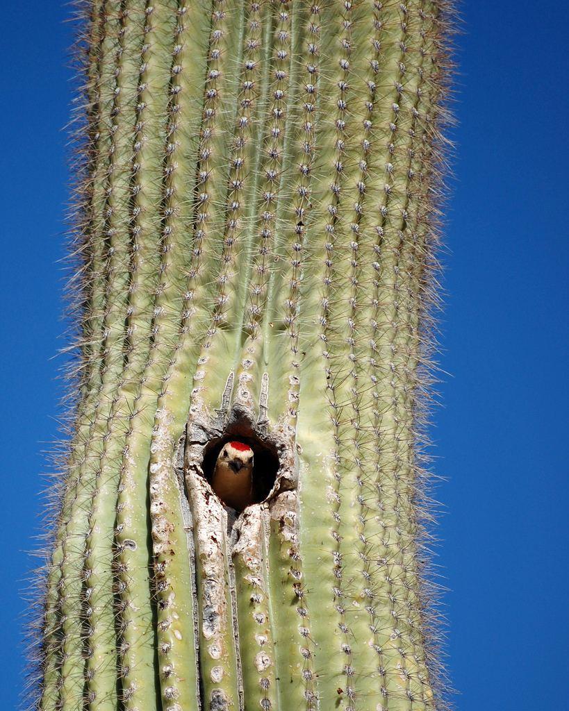 Обитатели кактусов