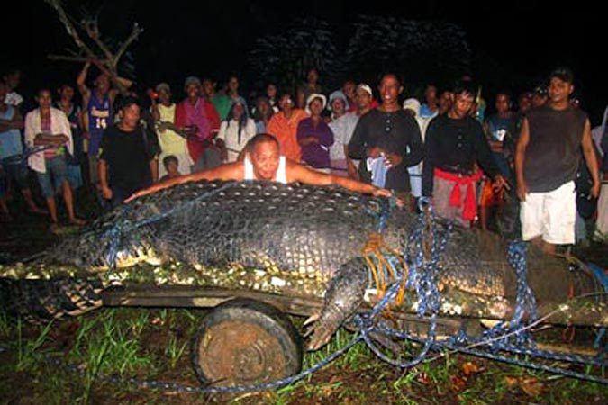 Шестиметровый гребнистый крокодил стал самым длинным в своем виде