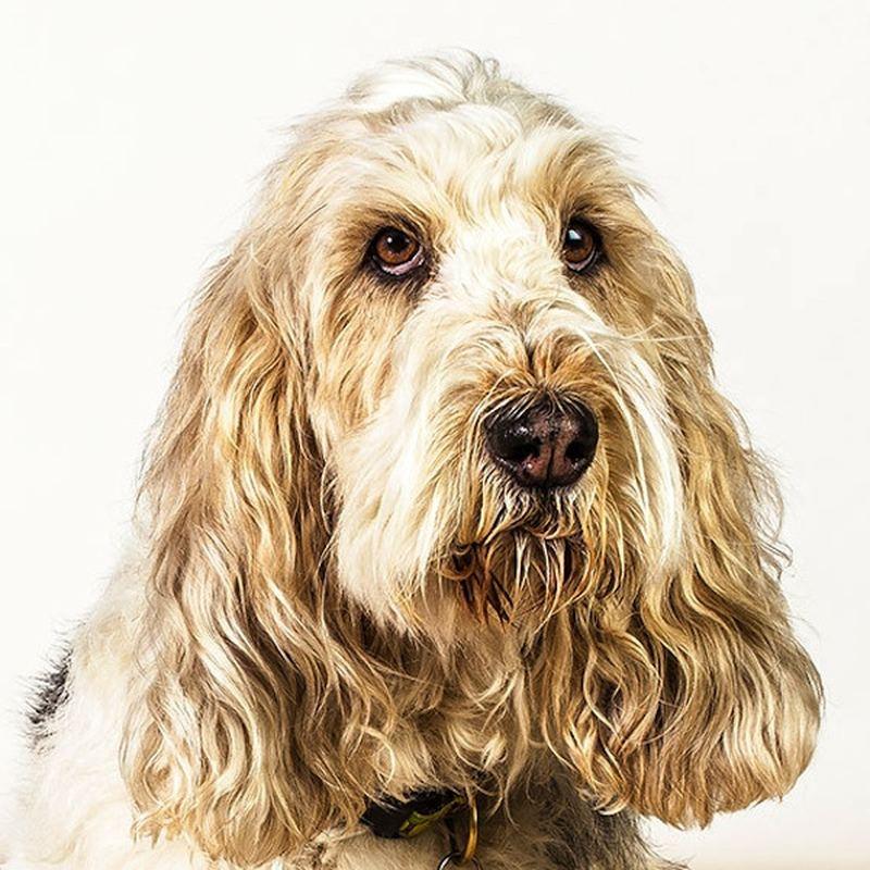 Портреты собак в фотографиях Барбары О'Брайен