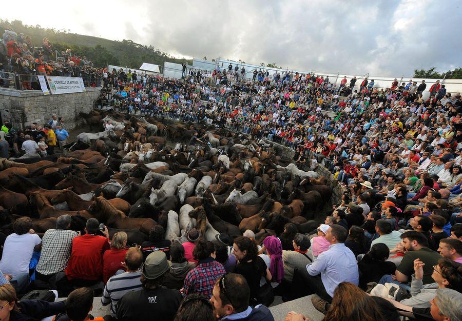 Фестиваль стрижки диких лошадей в Испании