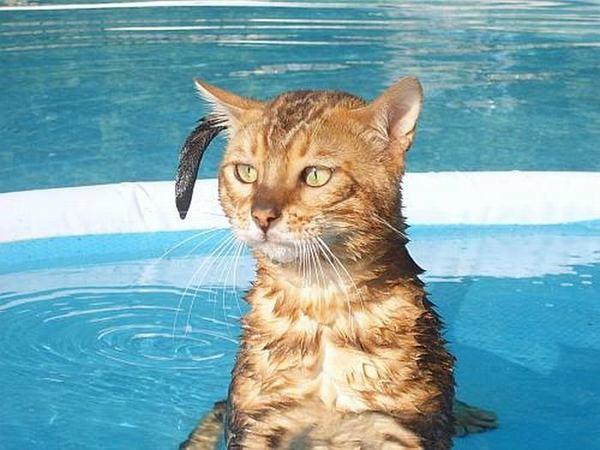 Один миг из жизни кошек