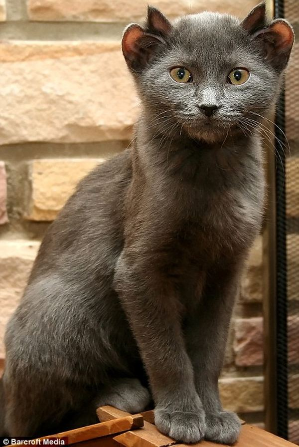 фото кошки йода