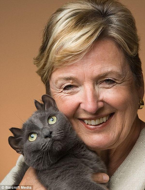 Йода - кот с двумя парами ушей