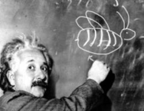 Загадка эйнштейна кто выращивает рыбок ответ фотография