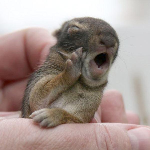 http://animalworld.com.ua/images/2012/June/Foto/Fun/1/Fun_anim_1.jpg