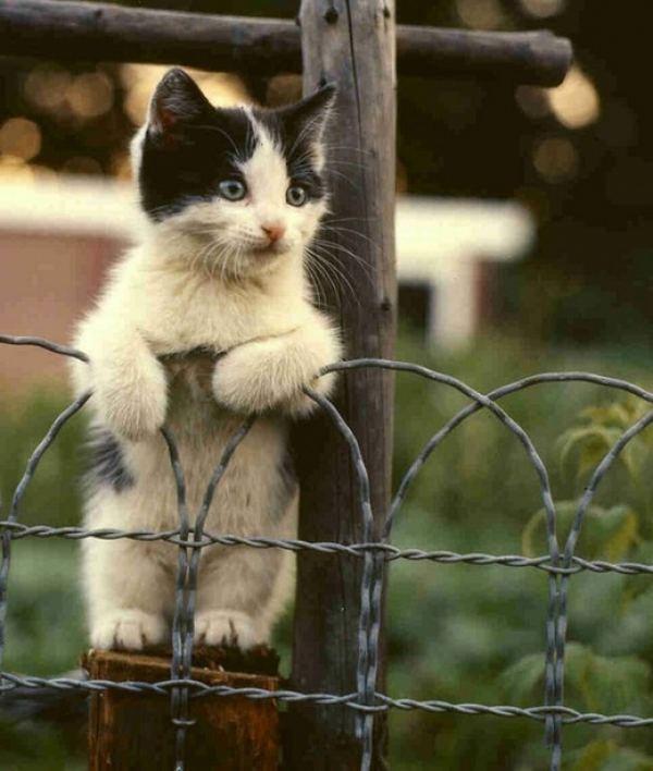 красивые и забавные картинки животных