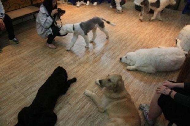 Собачье кафе (Dog Café) в Сеуле