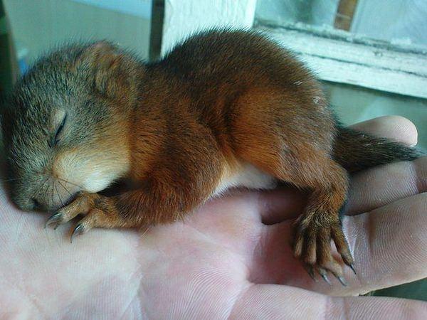 http://animalworld.com.ua/images/2012/June/Raznoe/Masik/Masik_12.jpg