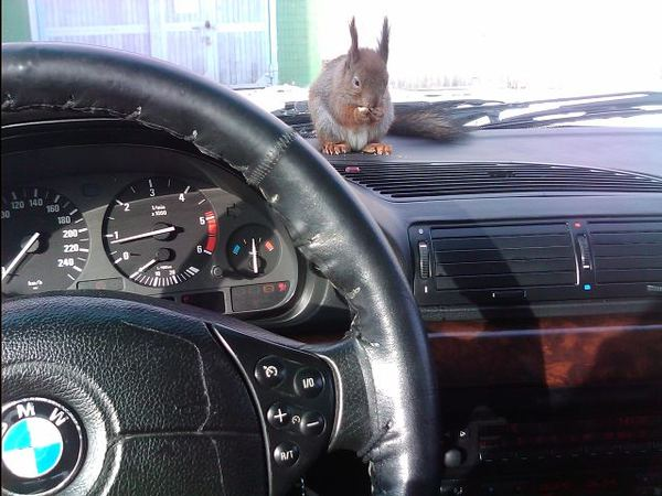 http://animalworld.com.ua/images/2012/June/Raznoe/Masik/Masik_9.jpg