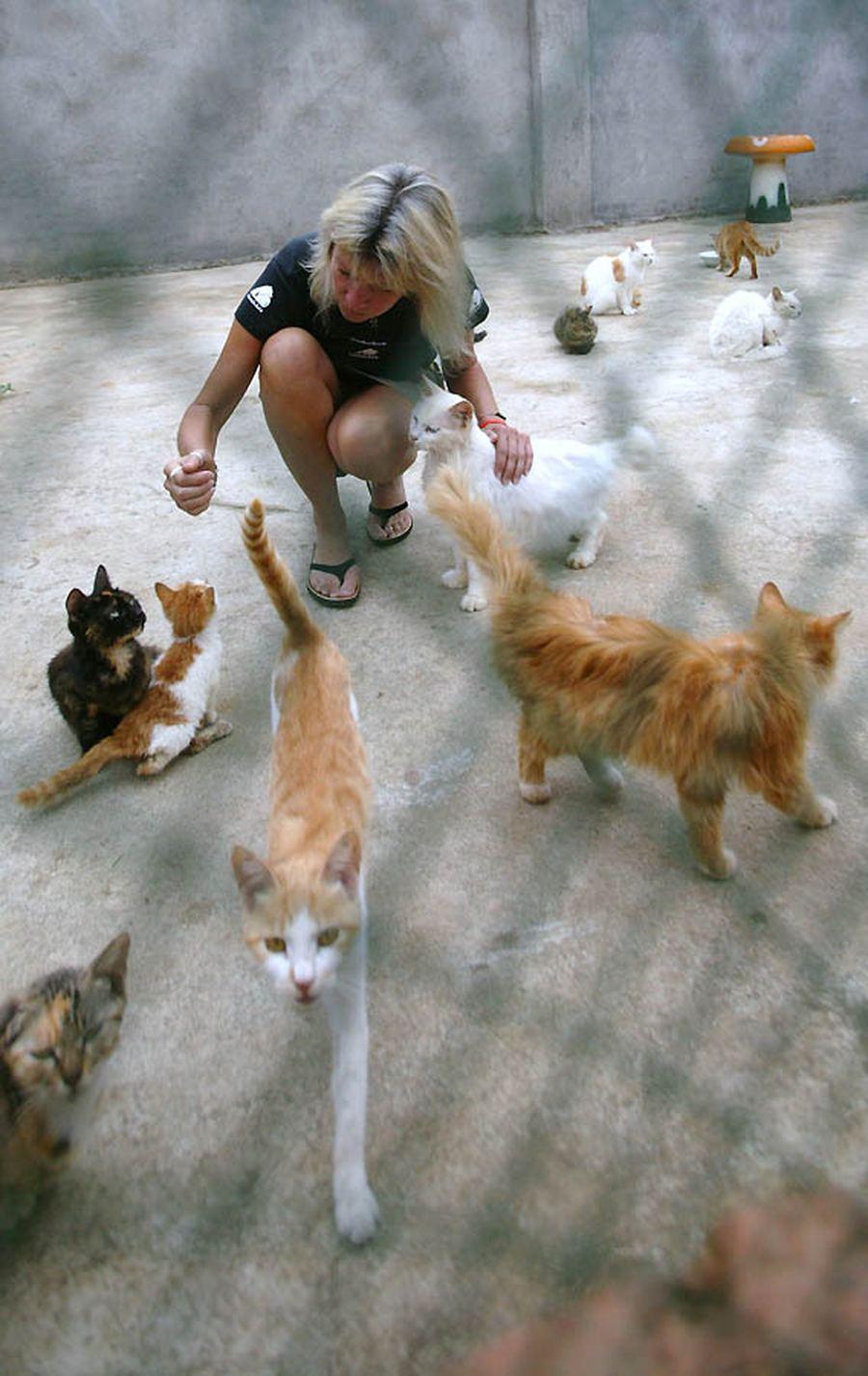 бездомных собак и кошек