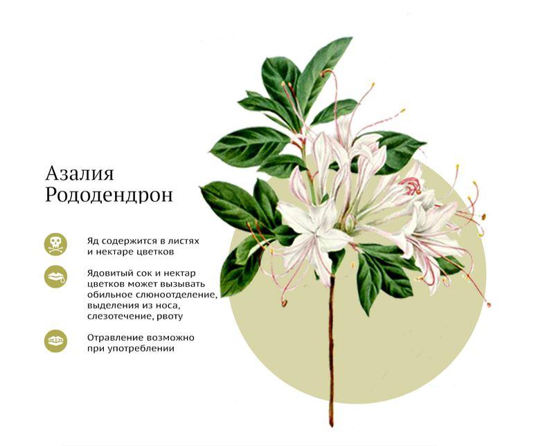Самые ядовитые комнатные растения