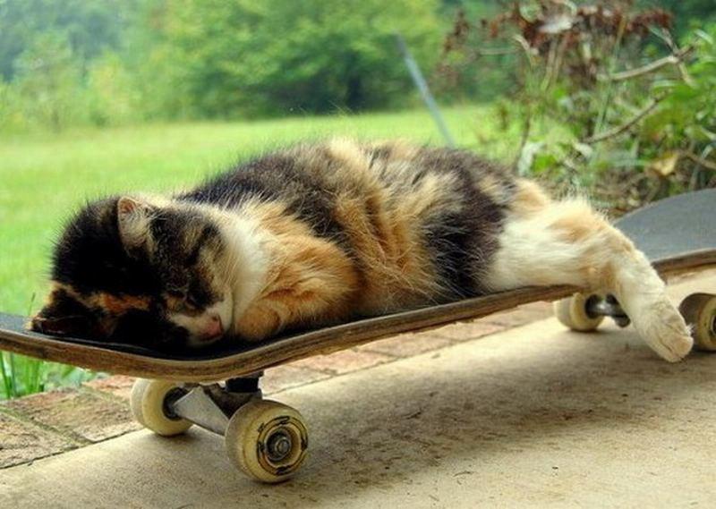 Веселые скейтбордисты