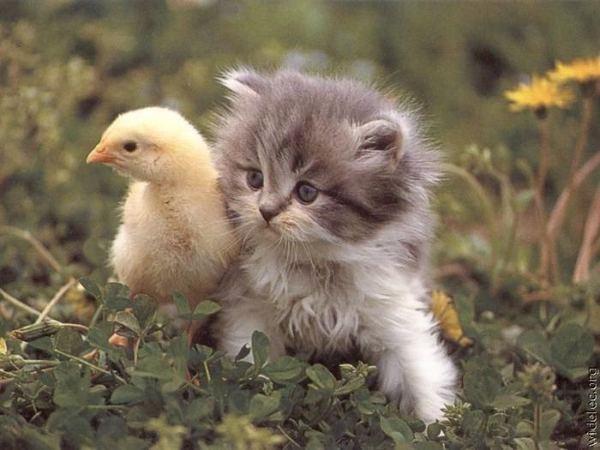 Сто почему о кошках и котах