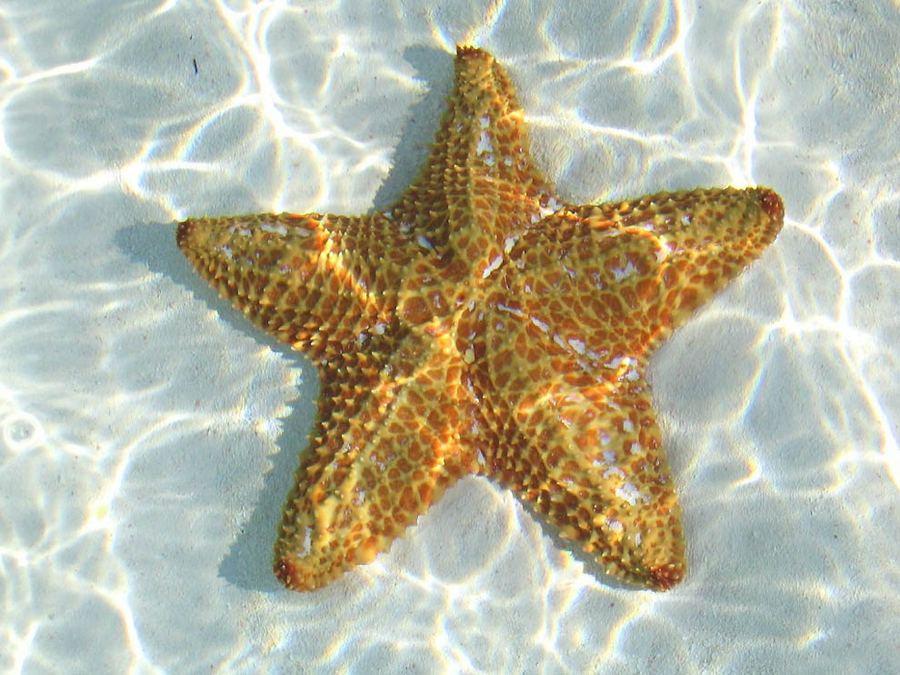 Интересное о морских звездах