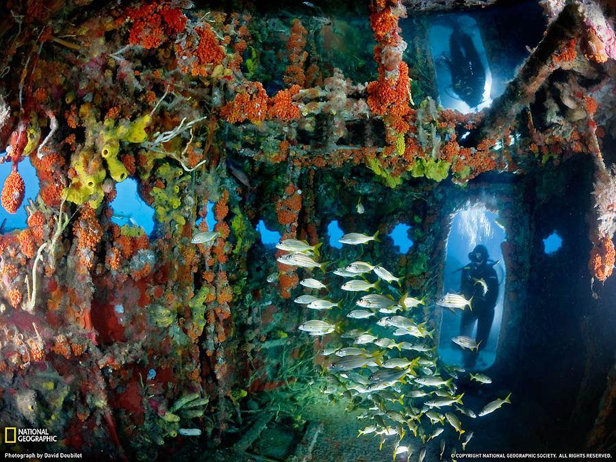 Дэвид Дубиле - мастер подводной съемки