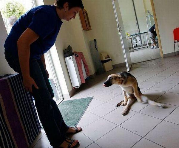 Порода собаки отражает характер её