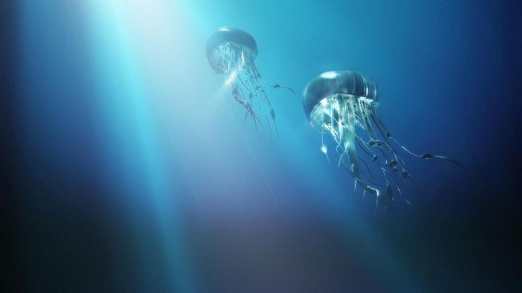 Интересные факты о медузах
