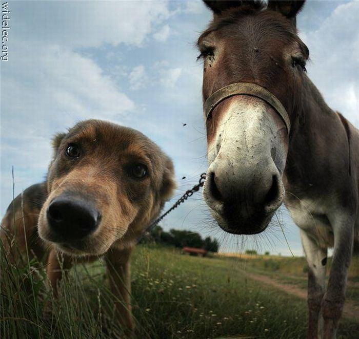 Забавные собаки и их очаровательные друзья