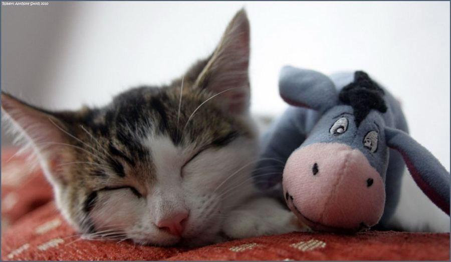 Забавные кошки и их друзья