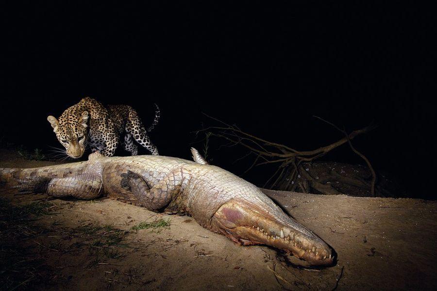 Тайная жизнь животных