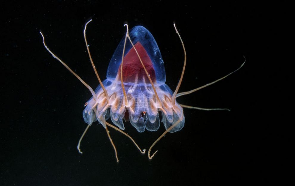 Необычные глубоководные обитатели океанских пучин
