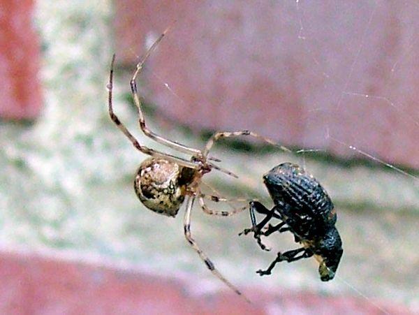 люди ловят паука