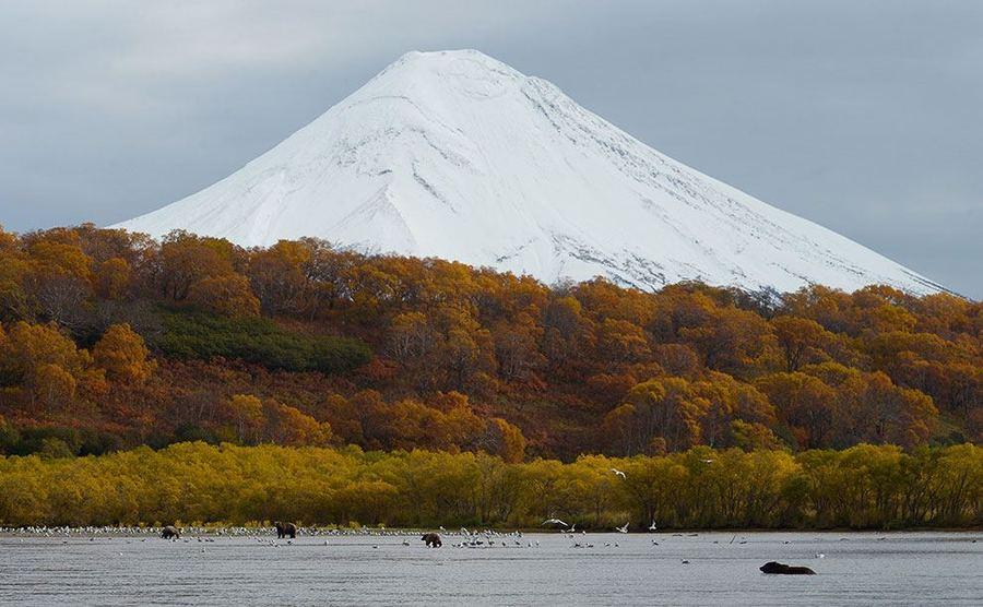 Большой медвежий репортаж с озера Курильское
