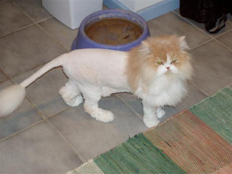 Как стричь кошку