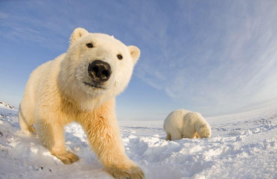 Лето белых медведей (ч5) смотреть онлайн бесплатно - хорошее качество без регистрации на smotricom