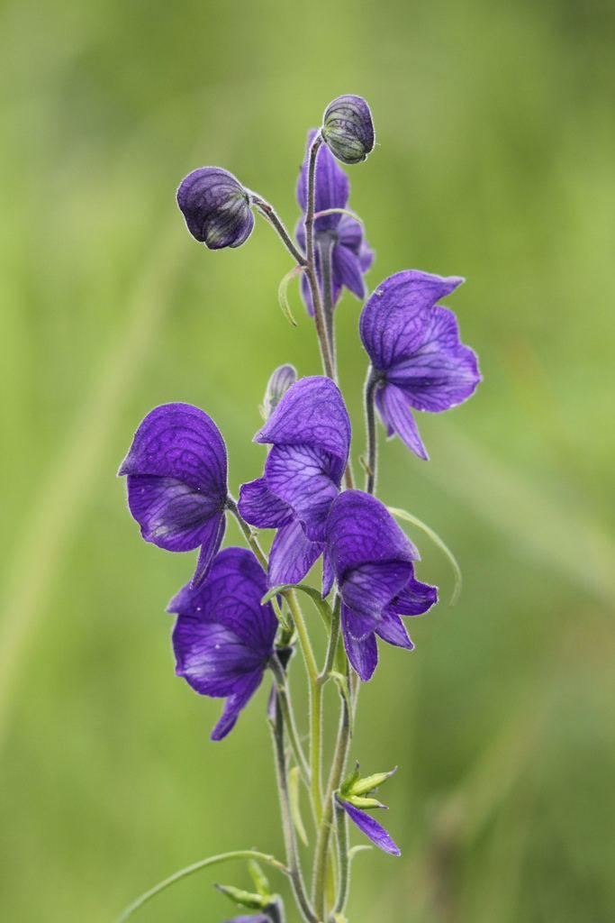 Самые необычные цветы