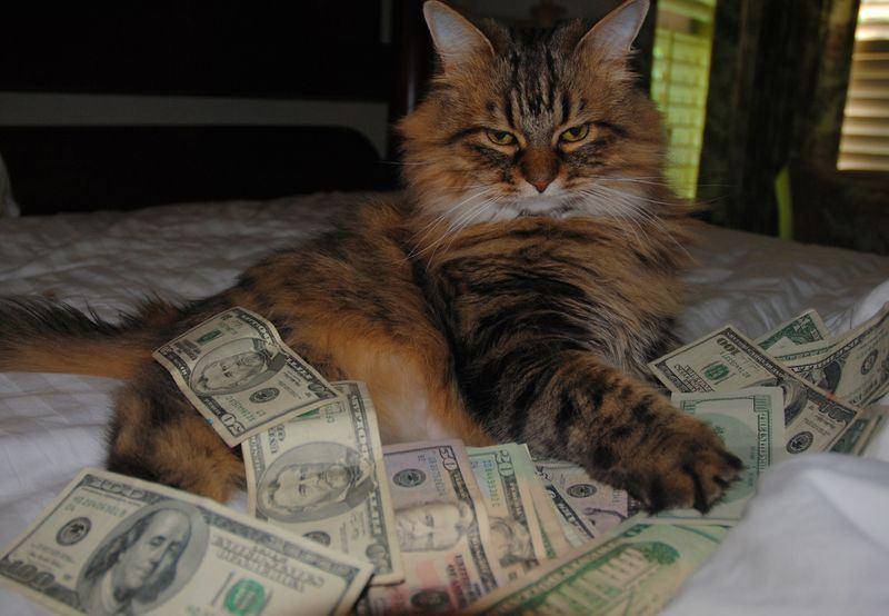 Народные приметы и суеверия о кошках