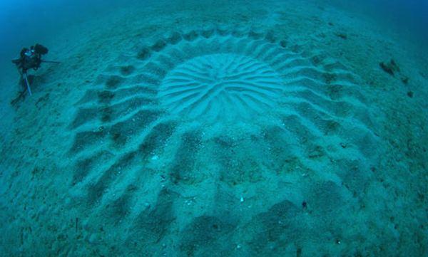 Таинственные подводные 'Круги на полях'